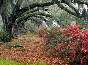 Oak Trees 1