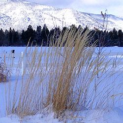 reed snow