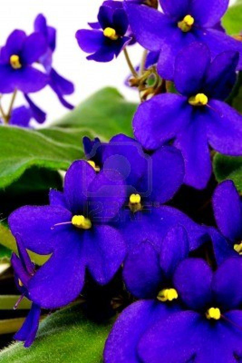 March 21 2013 Spring Equinox | Spiritblogger's Blog